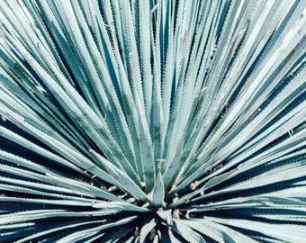 Cactus Succulents Boho Desert Photography - Blue, Green, Bohemian, Succulent, Fine Art, Wall Art Print