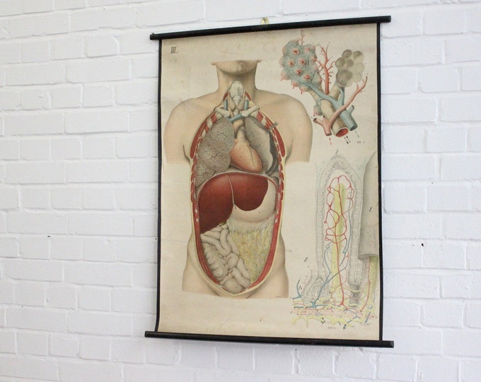 Early 20th Century Czech Anatomical Chart Circa 1908