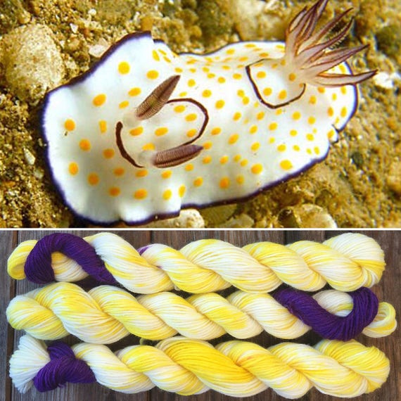 Chromodoris annulata, 100g merino nylon nudibranch inspired sea slug sock yarn