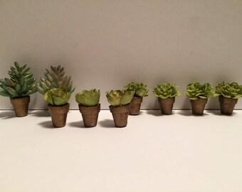 Miniature Potted Plants