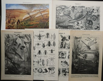 1895 Lot of 6 antique prints of INSECTS: Dragonflies, Bees, Snails, Cicadas ... Entomology. 122 years old engravings