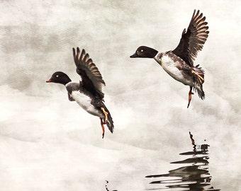 Duck Prints, Duck Art, Flying Ducks, Neutral Art, Nature Art, Wildlife Art, Wildlife Prints, Reflection, Grey Decor, Grey Art, Brown Decor