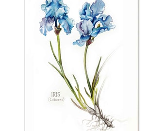 Irises Watercolour painting - Limited edition prints (100 Only)