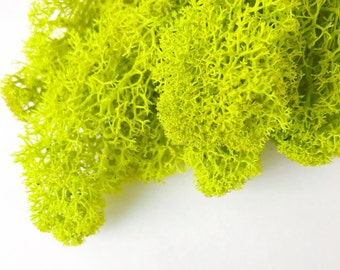 Reindeer Moss Lime Green Medium