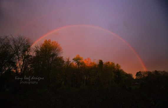 Double Rainbow Over Tree Line Original Photography