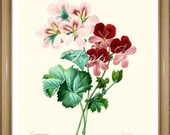 "Geranium print. #2. Botanical Print.  8x10"" 11x14"" Geranium."