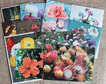 Vintage Flower Postcards Set of 12 Collectables Paper Ephemera Greetings Birthday Arts Crafts Collage Scrapbooking Cardmaking Supplies