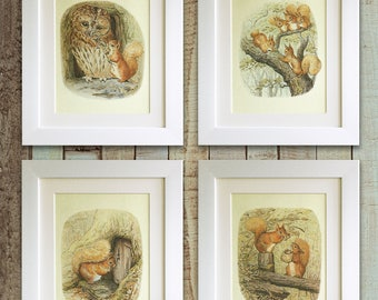 SET OF 4 Beatrix Potter Prints, *UNFRAMED* Birth, Christening, Nursery, Birthday, Picture Gift, Squirrel Nutkins