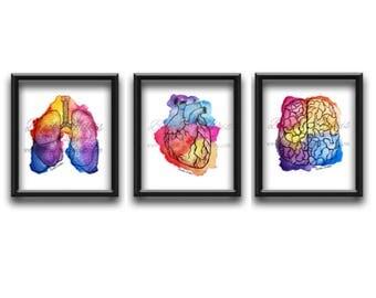Anatomy Artwork, Gift For Doctor, Medical Artwork, Gift For Nurse, Medical Gifts, Watercolor Art, Doctors Office Decor, Medical Student Gift
