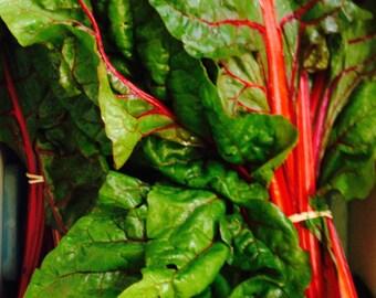 Heirloom Seed Ruby Red Rhubarb Swiss Chard