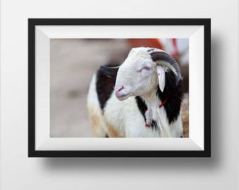 Digital Download, Goat Photography, Goat Picture, Goat Prints Digital, Animal photograph, Printable Photo, Printable Nursery, Children Decor