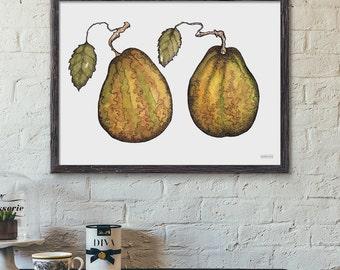 Botanical Fruit Print, Pears Illustration