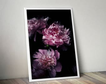 Peonies, pink peonies, flower photography, Botanical print, plant print, nature photography, floral photography, peonies photo, gift for her