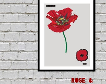 Rose & Poppy Illustration