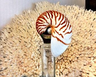 Nautilus Topped Bottle