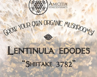 Organic Shiitake Sawdust Spawn (Lentinula edodes 3782) LIVE MYCELIUM - 50g *PDF Book Included