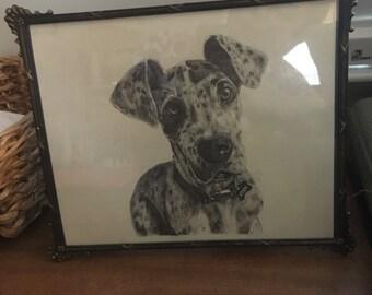 Odin- Great Dane Puppy
