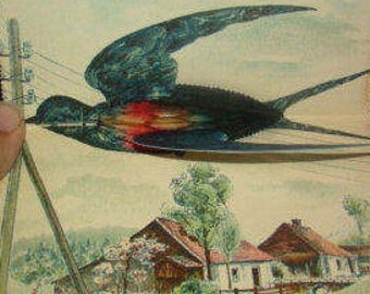 SALE Fantastic Vintage Honeycomb Swallow Postcard