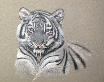 Baby White Tiger. Personalized Animal Portraits, colored pencil, Pet Portrait colored pencil from photo