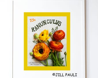 Rannuculus Seed Packet Wall Art