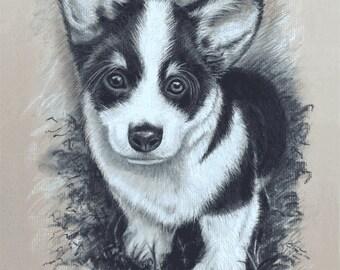 "Corgi Puppy Giclee.  Original drawn in black and white Charcoal. 8"" x 10"""