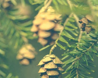 Evergreen Photograph - Green Nature Print - Hemlock Pine Cone Photograph - Nature Art Print - Rustic Decor - Cottage Decor - Green Wall Art