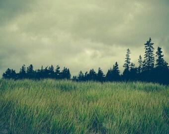 Nature Photography - Canada - Moody Art - Dark Art - Green Nature Print - Landscape Photography - Gray Decor - Green Decor - Oversize