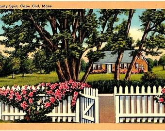 Vintage Cape Cod Postcard - An Old Cape Cottage in Dennis (Unused)