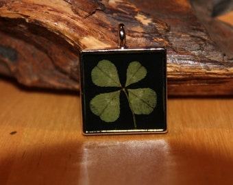 Real Four Leaf Clover Square Charm for St. Patrick's Day, graduation, good luck, Irish Shamrock for Good Luck