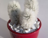 Hairy Cactus - Funny Small Gift - Home Decor