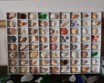 SPECIMEN TRAY Seashell Driftwood Sea Glass Starfish Coral Sea Urchin Shadow Box Printers Drawer Beach Coastal Cottage Greenwich Treasures
