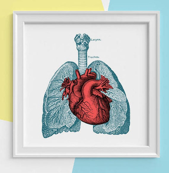 Lungs and heart Print, wall art, Human anatomy print, Science student gift- Human heart and lungs art print, Doctors office gift  SKA030SQ1