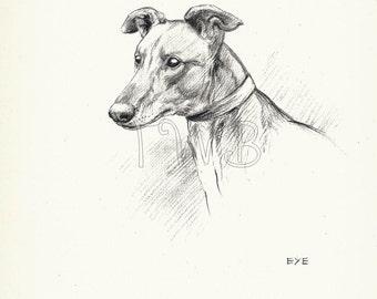 SALE Dog Print, POINTER, Puppy Print, Art Print, Home Decor, Paper Ephemera, Book Plate, K.f. Barker Illustration, Wall Decor, A-9