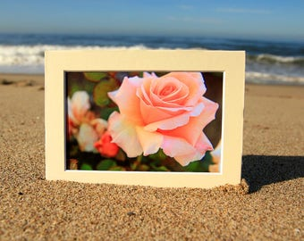 Peach Rose Photo Print - Romantic Roses - Fine Art Flower Photography - Cottage Chic Style Decor - Size 8x10, 5x7, or 4x6