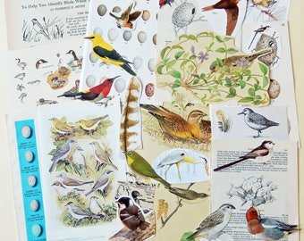 Bird Themed Paper Ephemera Craft Kit, Scrapbooking,  Collage, Junk Journals