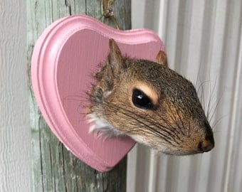 Squirrel Head Mount 006- Taxidermy Female on Light Pink Heart Plaque