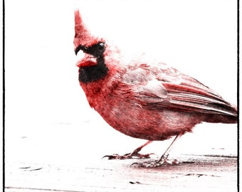 A wonderful picture of a cardinal on a snowy day.