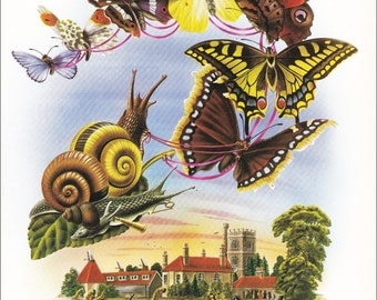 70's illustration design Alan Aldridge psychedelic Butterflies Airlift insect vintage print anthropomorphic 8.25x11 inches