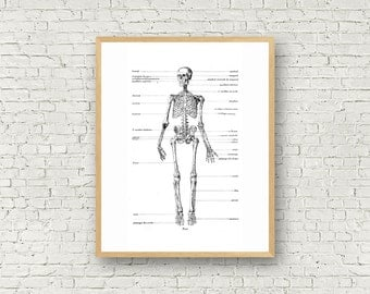 Skeleton Wall Art, Old Illustration, Black and White, Digital Art, Anatomy, Typography,  Anatomical illustration, Profile, Skull, Bones