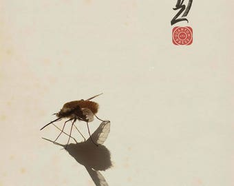 Dark-edged Bee-fly:  Giclée print