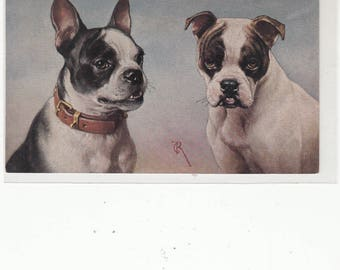 Boston Terrier And Friend Scarce Antique Postcard