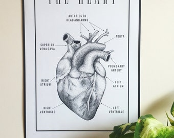 Anatomic Heart Poster