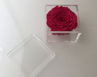 Individual Jumbo Eternity Rose in a Lidded Lucite Box