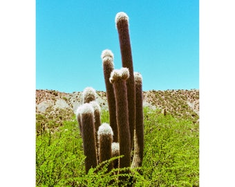 Bolivia Photography, Tupiza, Cactus, Mountain, Beauty In Nature, Sunlight, Clear Sky, Blue, Green
