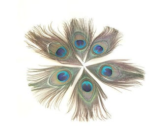 10 10x18cm Peacock eye feathers