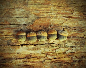 Acorn Photography,Nature Photography,Fall Photo,Autumn Photo,Still life,rustic,Botanical,Oak,food photo,wood,fall gift,wall art, fine art