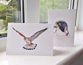 Birds of Prey Greetings Cards, Peregrine Falcon, Kestrel Greetings Cards x 2