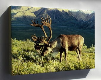 Canvas 24x36; Reindeer (Rangifer Tarandus), Also Known As The Caribou