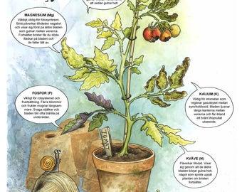 Poster A2 Näringsbrister hos växter