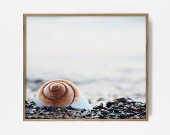 Seashell, Printable, Photograph, Print, Poster, Beach, Shore, Ocean, Tropical, Tropics, Wall Decor, Shell, Decor, Fine Art, Digital Download